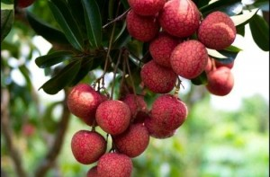 Summer Season- It's time to Enjoy Litchi and Longan