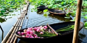 Vietnam Beauty Via Lotus Flower Lakes In The Whole Country Part 1