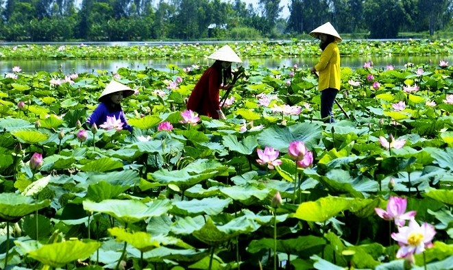 Vietnam Beauty Via Lotus Flower Lakes In The Whole Country Part 1 (5)