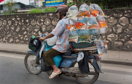 Western Tourists Are Surprised Of Vietnamese Motorcyclists  (1)