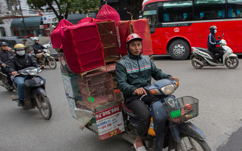 Western Tourists Are Surprised Of Vietnamese Motorcyclists  (3)
