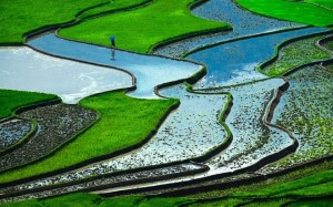 Vietnam Terraced Rice Paddies On Top Surreal Landscapes