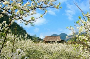 Explore natural beauty and ethnic culture of Bac Ha, Lao Cai