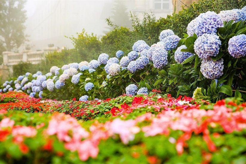 Le Jardin Flower Garden D'Amour Love Garden