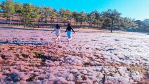 Dalat Pink Grass Hill – Snowy Hill