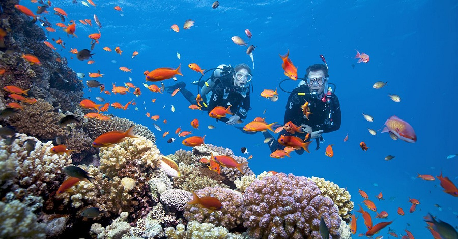 many coral, a wide range of Flora and fauna on the shoreline and under the sea.