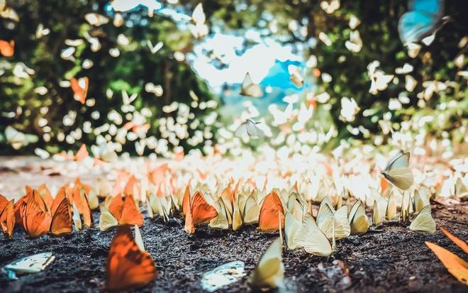 Butterflies cover all paths