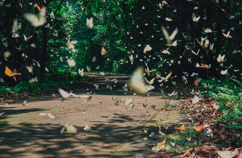 Thousands of butterflies floating in the air