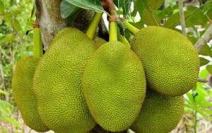 Jackfruit is one of fantastic fruits in Vietnam