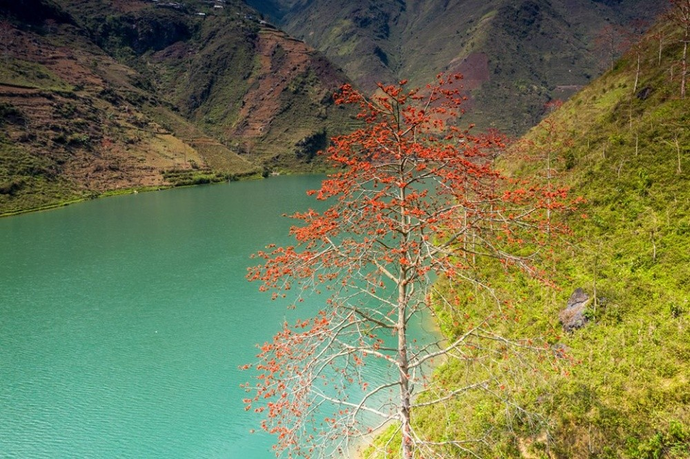 Bombox ceiba bloom on river's banks