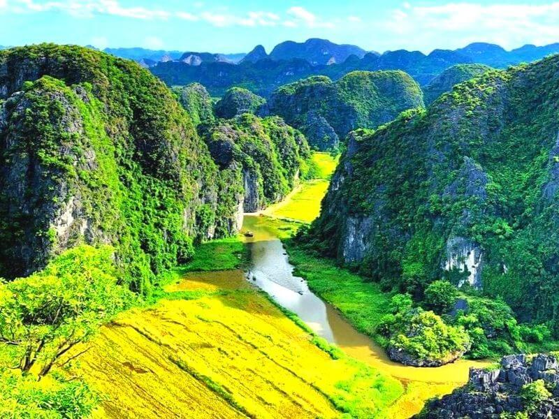 The stunning gold rice field under the cave