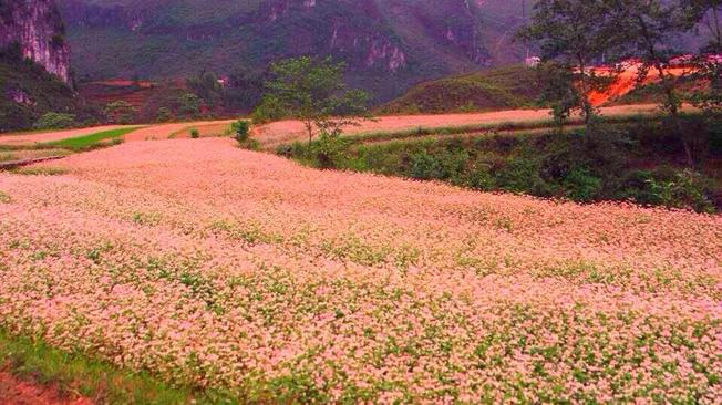 Make a flower season covering the whole land in pink