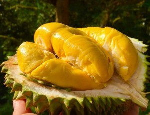 Vietnamese fruit: Durian, fantastic or terrible?