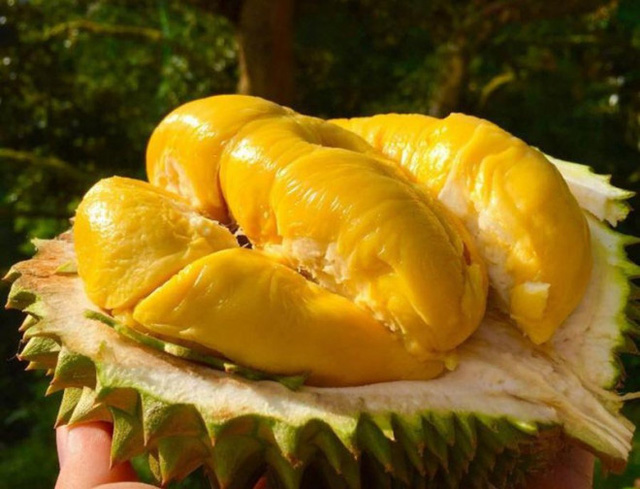 Durian, the most controversial fruit in the world