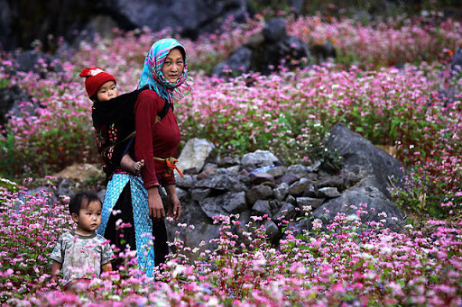Dong Van plateau in the season of buckwheat flowers