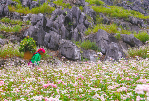 Flowers spread all the way to the valleys and ravines